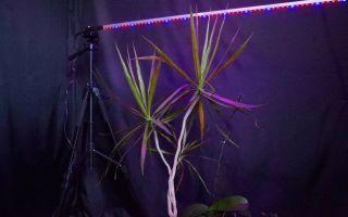 Все что нужно знать о подсветке растений светодиодной лентой