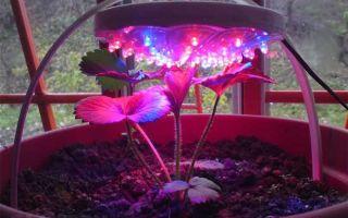 Как сделать LED фитолампу для растений