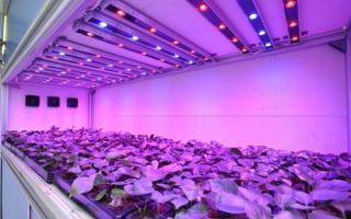 Выращивание растений под светодиодной фитолампой