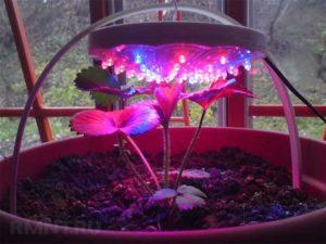 Светодиодная фитолампа для растений