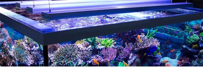 Подсветка аквариума лед лампами