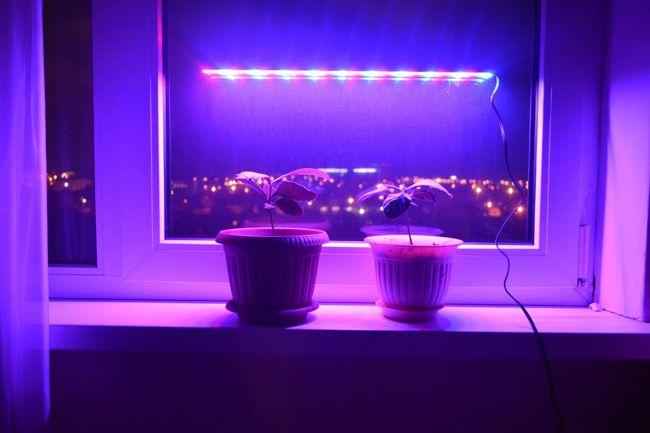Фитолента для комнатных растений