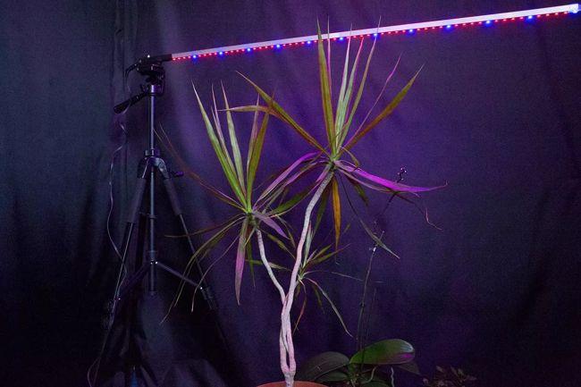 Фитолента для растений